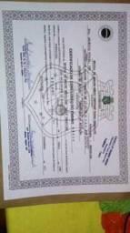 Certificado de conclusão do ensino médio