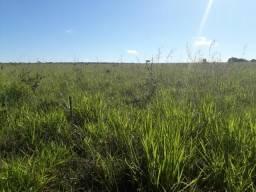 Fazenda de 785 hectares em Rosário Oeste MT