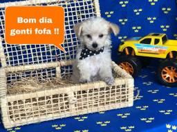 Com Protocolo de Vacina Poodle Filhotes Maravilhosos