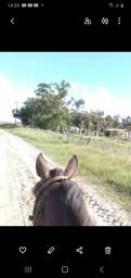 Venda permanente cavalos