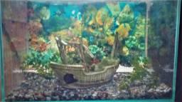 Aquario 50 x 25 x 35 Completo - Decorado e com todos acessorios!