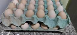 Ovos de Angolas Francesa e venda de Angolas