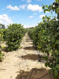 Terreno, plantações e agricultura