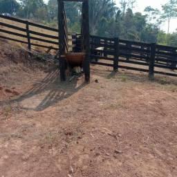 Título do anúncio: Vende se 11 alqueires/7 km de vale do anari Rondônia