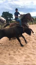Égua de Esteira!