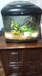 Aquário para peixes completo
