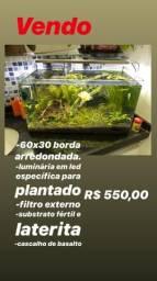 Aquário plantado montado