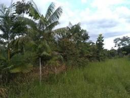 Sitio 60x420 em terra alta por 35 mil reais com igarapé e açaizal zap *