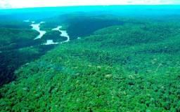 76 mil hectares no Para - Jacareacanga PA