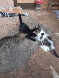 Doação de gatos. Garantimos a castração