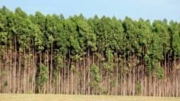 Compro Floresta ou Madeira de Eucalipto