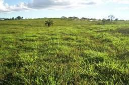 Adquira sua terra e seu gado parcelado