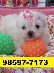 Canil Top Cães Filhotes BH Maltês Lhasa Poodle Shihtzu Yorkshire Beagle Bulldog Pug