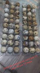 Ovos de codorna 60 por R$15