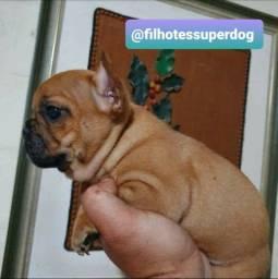 Femêa Bulldog francês