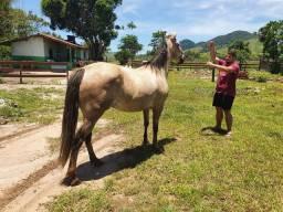 Vendo Cavalo 7/8 QM