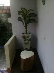 Vasos de plantas muito bonito