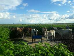 Vacas e Reis e um garrote total 10