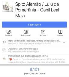 Face Canil Leal Maia / Lulu / Especializados em Spitz