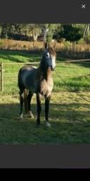 Cavalo MM almenara mg