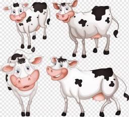 Gados e vacas Girolandeza lindas a venda