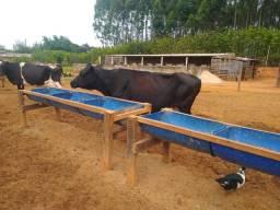 Vacas TOP'S