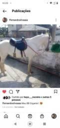 Título do anúncio: Cavalo Manga Larga.