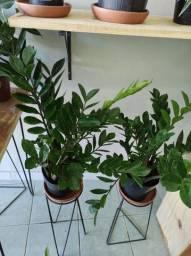 Promoções de planta