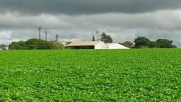 Título do anúncio: GS - Credito Rural/Terras/Maquinarios