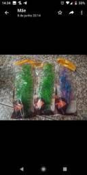 Plantas para aquário