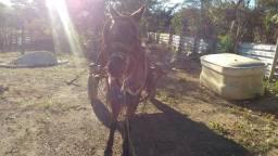 Vendo uma égua, caroço e ariata São Francisco nova aceito troca