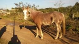 Égua bragada R$ 1.500,00