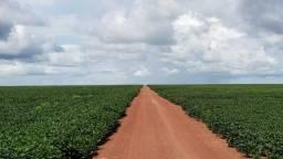Fazenda 14600 há no Maranhão