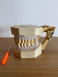 Manequim odontológico Art dental