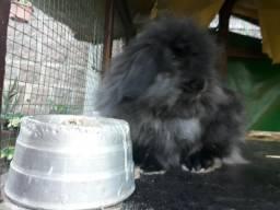 Coelha fuzzy lop