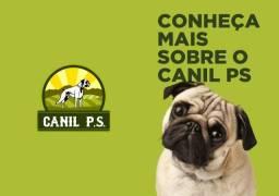 Pug canil PS