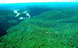 234 mil Hectares de Floresta Amazonica