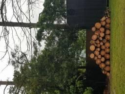 Doação de cortes de pinus!
