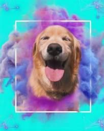 Título do anúncio: Arte para seu pet