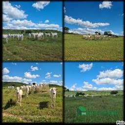 """""""Fazenda para engorda no MS"""" - 600ha Rio Negro, MS"""