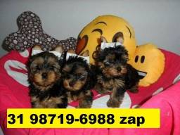 Canil Filhotes Cães Top BH Yorkshire Poodle Shihtzu Maltês Beagle Lhasa Bulldog