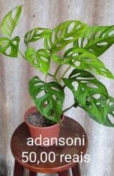 Título do anúncio: Plantas diversas
