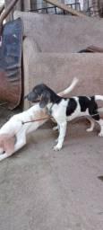 Título do anúncio: Cachorro e cachorra