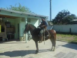 Cavalo Crioulo Reg.(de confiança!)