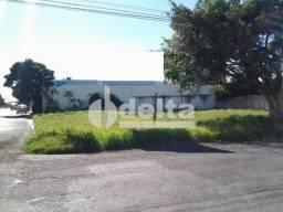 Terreno para alugar em Umuarama, Uberlândia cod:511977