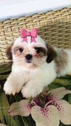 Shih-Tzu menininha!!!