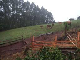 Sítio de 2.6 hectares em Gramado com Vísta