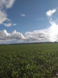 Título do anúncio: Fazenda para Venda em Santo Antônio do Leverger, Zona Rural, 2 dormitórios, 1 banheiro