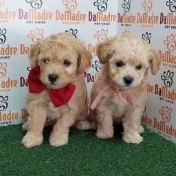 Título do anúncio: Poodle dia das crianças