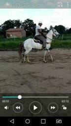 Venda urgente Cavalo
